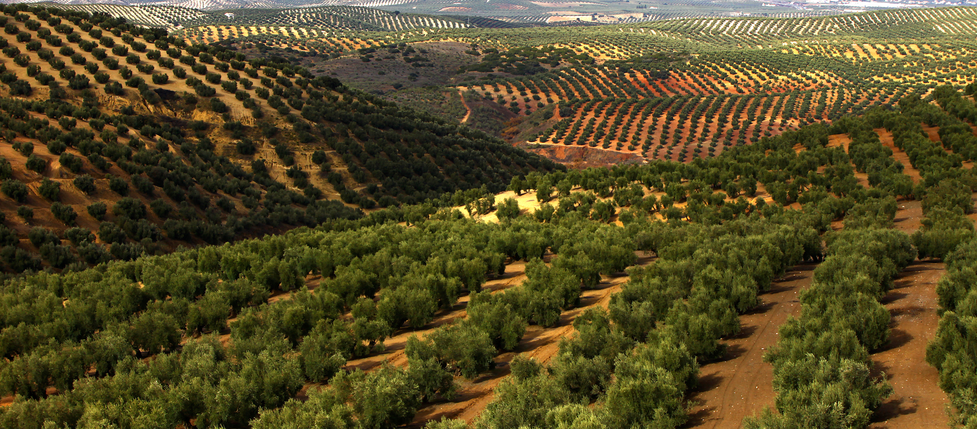 davor rostuhar, spain, jug spanjolske, andaluzija, andalusia, spain nature
